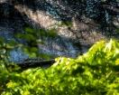Granite Rock Image 2